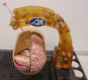 MRI Robot for Neurosurgery